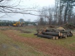 North Castle Tree Removal for Armonk Park Hits Raw Nerve