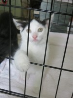 """A kitten looking for a new """"furever"""" home."""