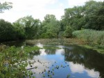 Harrison Brook Site of Mysterious Fish Kill