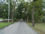 Con Edison to Cut Trees on New Castle Street, Cites Public Safety