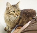 Cats Rescued From Fatal Mt. Kisco Fire Up for Adoption