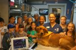 Youngsters Join Veterinary Summer Camp in Patterson