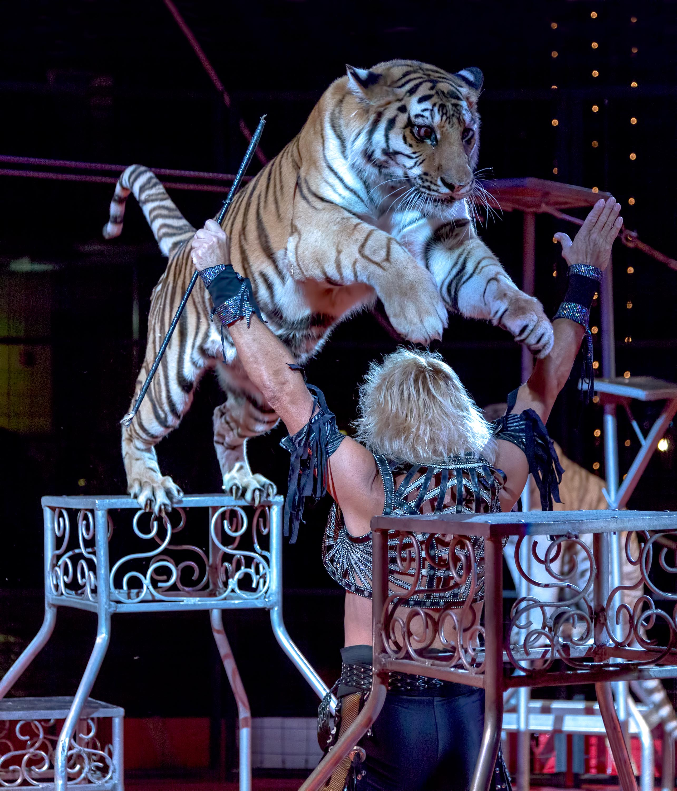 Copy of Royal Hanneford Circus | The Examiner News