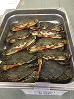 soft-shell crab in westchester county